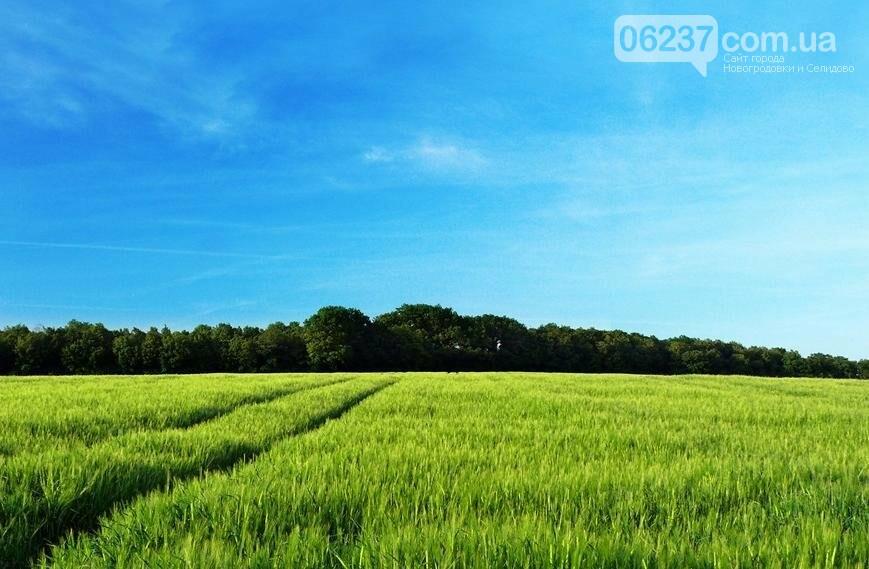Рынок земли даст фермерам стимул долгосрочного инвестирования в нее, фото-1