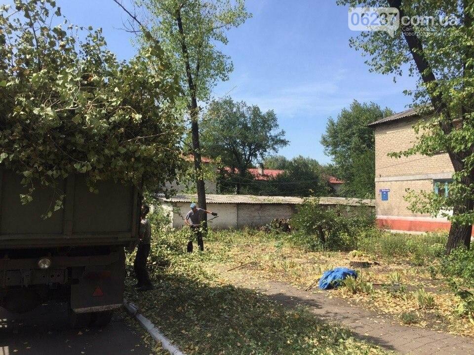 Випилювання аварійних дерев в м. Новогродівка, фото-1