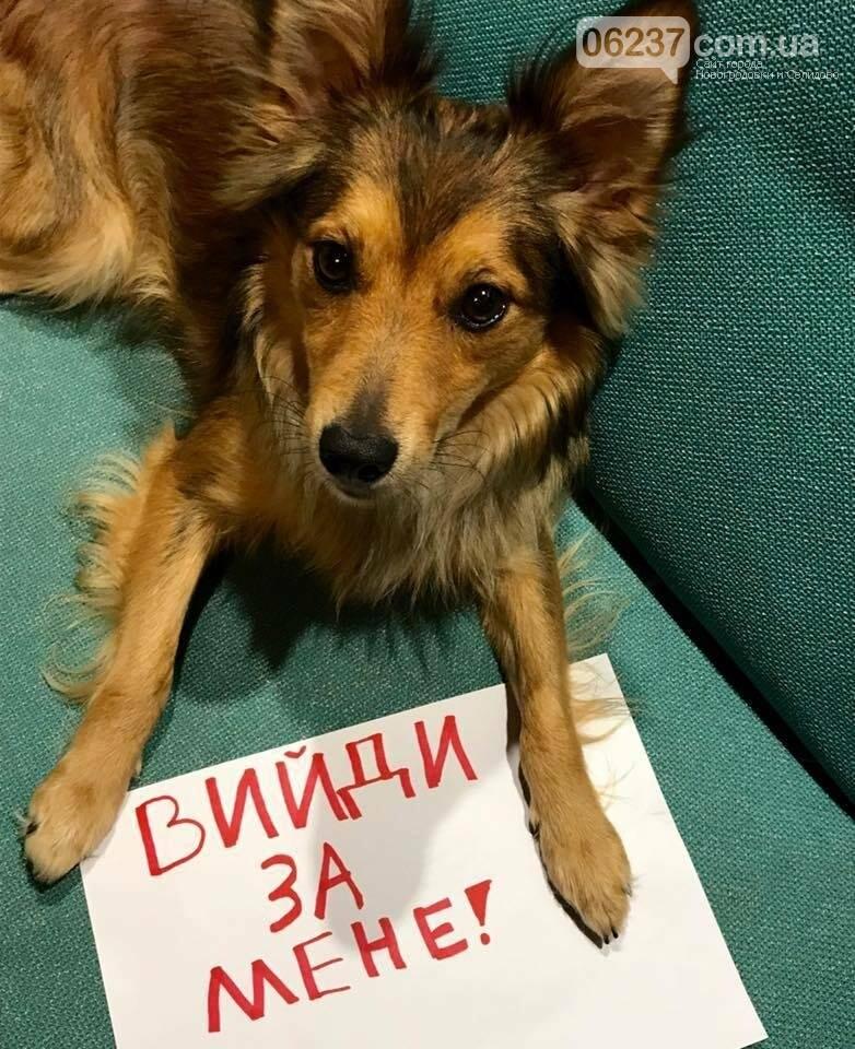 """""""Выйди за меня!"""": Как и ради чего прошел Всеукраинский марш за права животных, фото-6"""