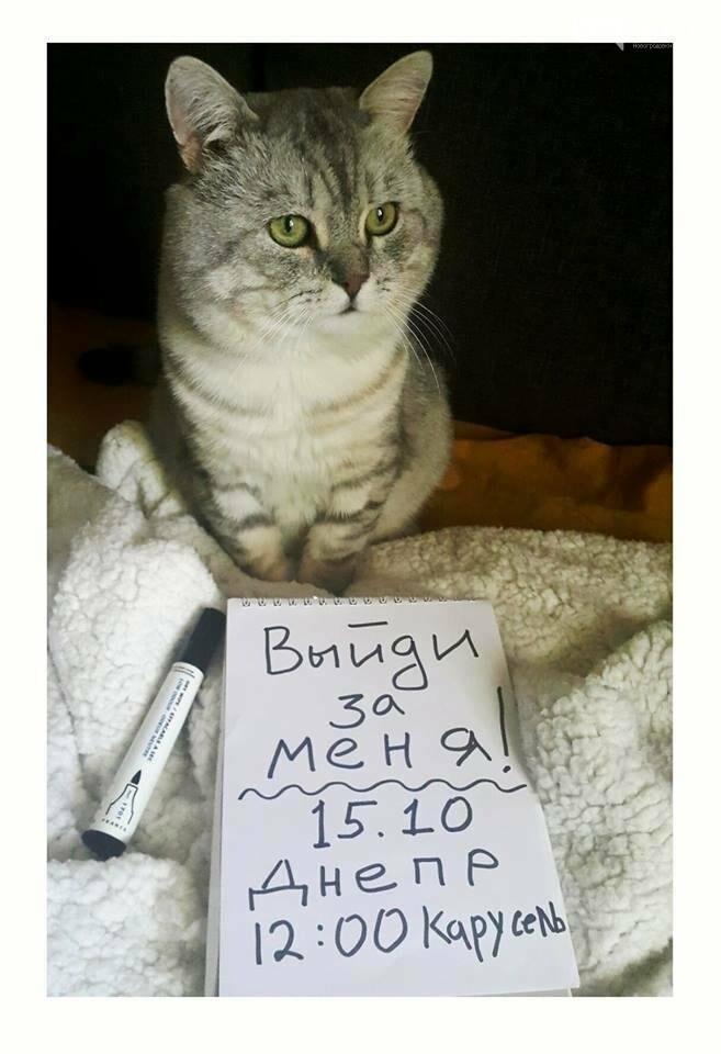 """""""Выйди за меня!"""": Как и ради чего прошел Всеукраинский марш за права животных, фото-1"""