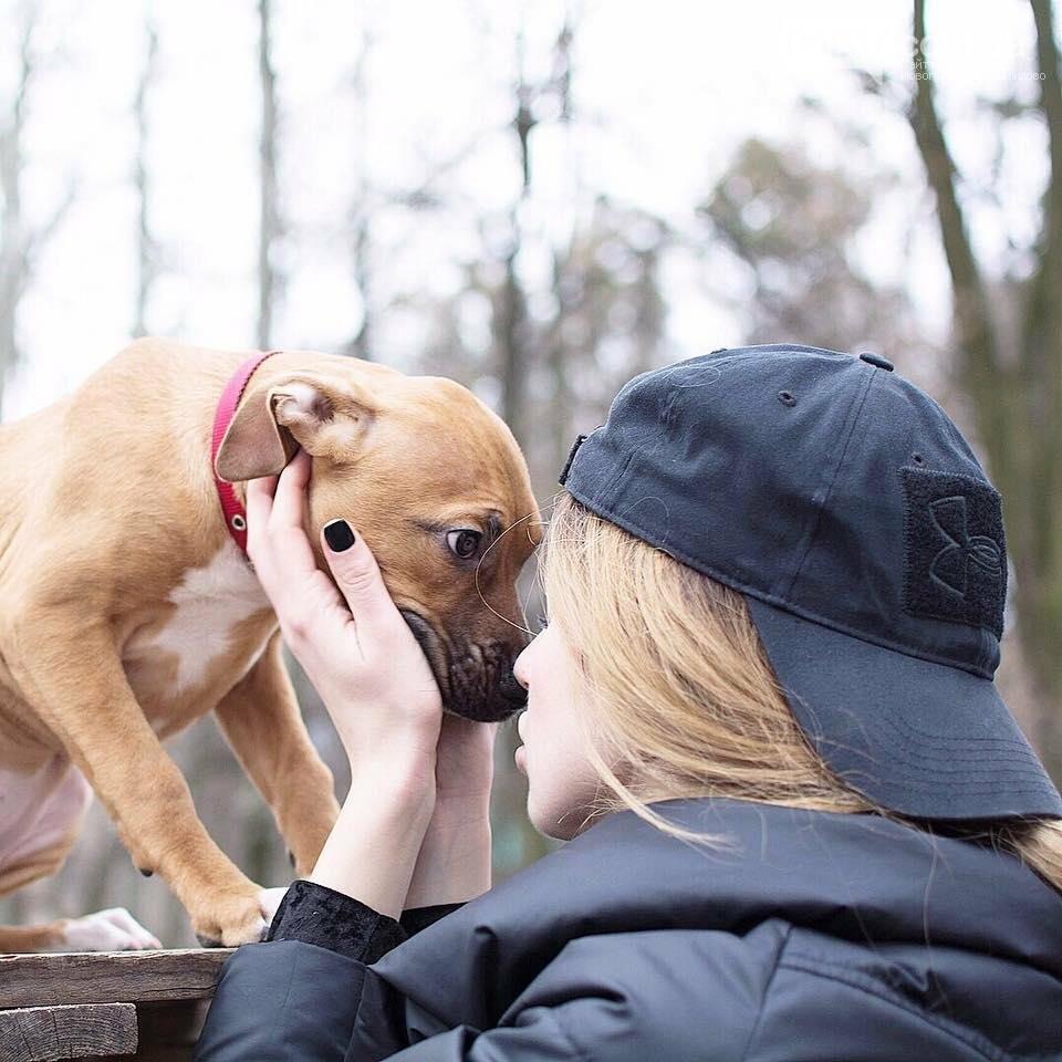 """""""Выйди за меня!"""": Как и ради чего прошел Всеукраинский марш за права животных, фото-5"""