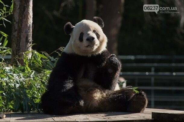 Мелания Трамп в стильном наряде побывала в зоопарке, фото-4