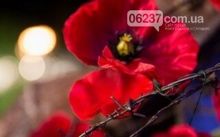 Украинский народ заплатил невероятно высокую цену за освобождение от нацизма - Порошенко, фото-1