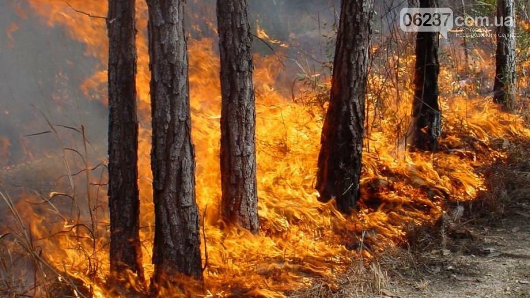 В Украине объявлена чрезвычайная пожароопасность, фото-1
