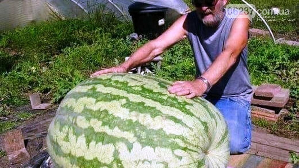 «Самая большая ягода в мире». на Херсонщине вырастили гигантский арбуз, фото-1