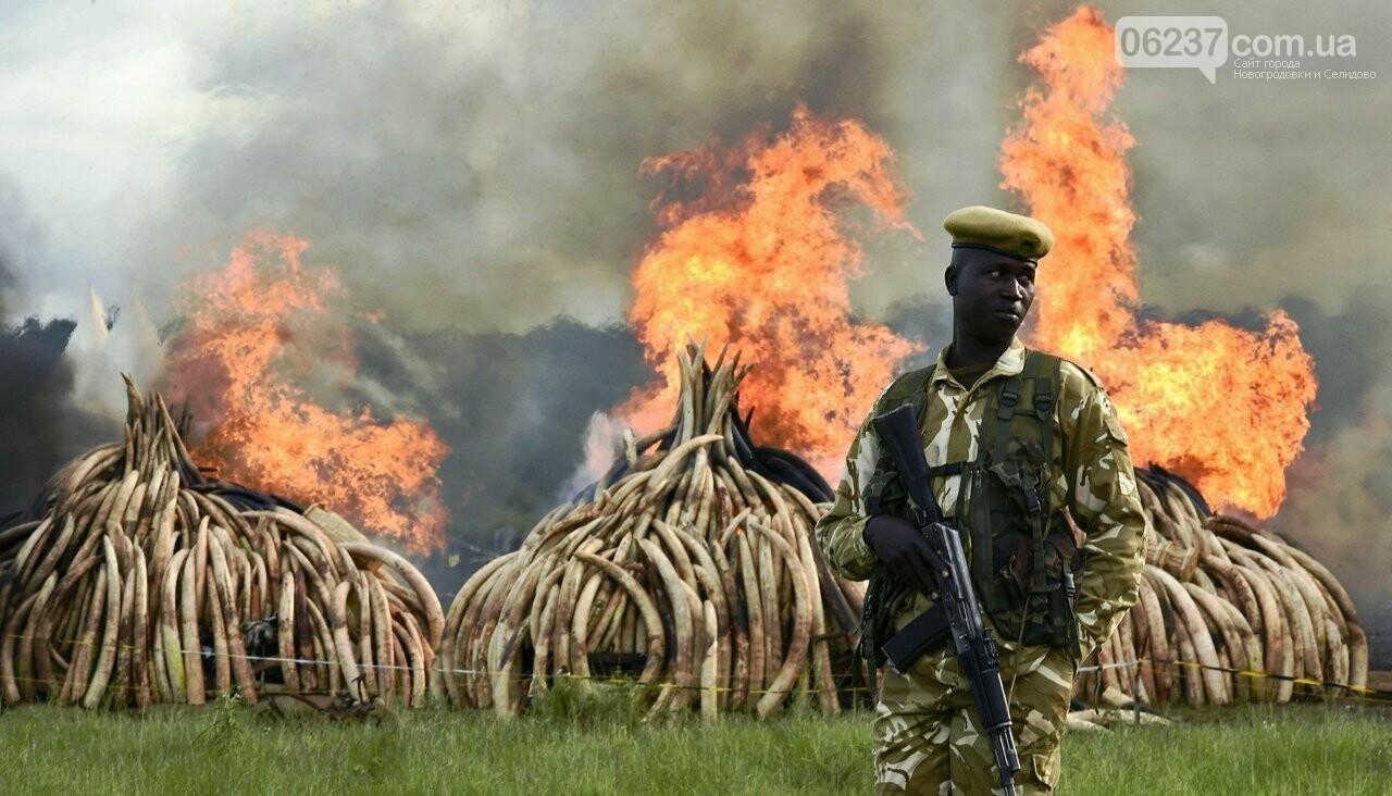 Человек уничтожил более половины диких животных за полвека. Ученые говорят о шестой волне массового вымирания на Земле, фото-1