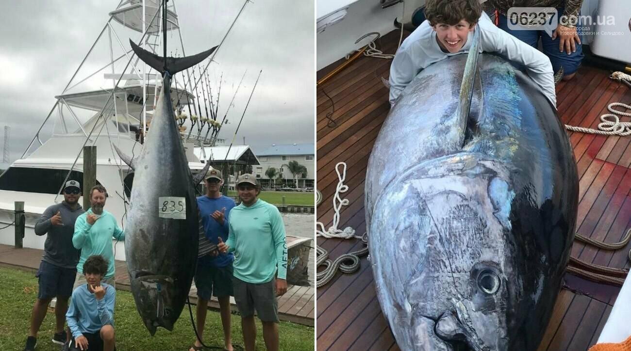 Гигантского тунца продали за три миллиона долларов, фото-1