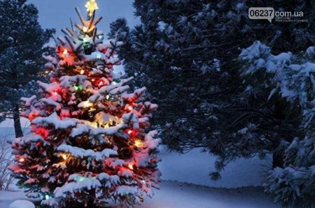 Когда и как принято убирать новогоднюю елку: приметы и традиции, фото-1