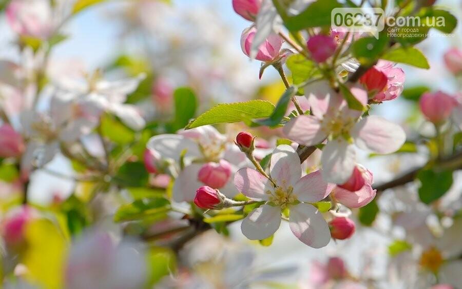 В апреле в Украину придет летняя жара, а в мае резко похолодает: прогноз синоптиков до конца весны, фото-1