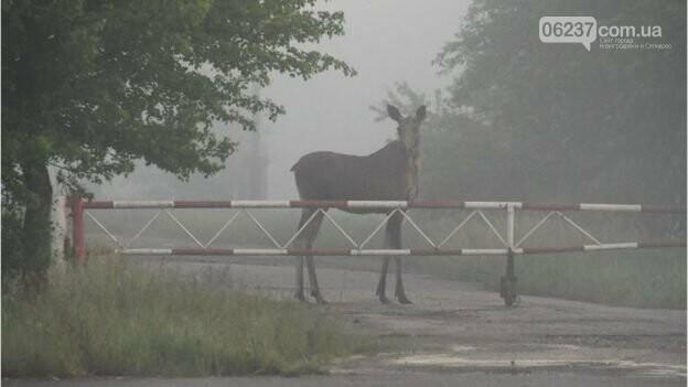 Дикі тварини Чорнобиля - фото, фото-1