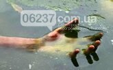 В Авдеевке в карьере нашли труп мужчины со следами избиения, фото-1