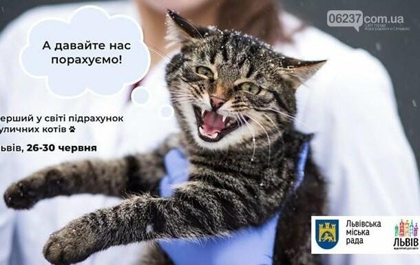 Во Львове впервые в мире подсчитают бродячих котов, фото-1