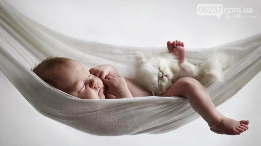 Ученые рассказали как хорошо выспаться, фото-1