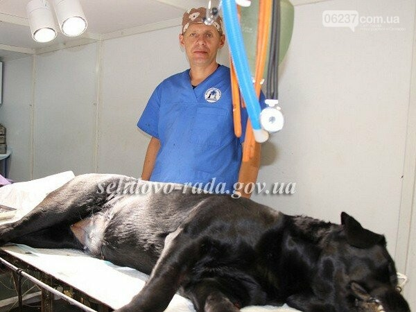 В Селидово началась массовая стерилизации бездомных собак, на которую выделили 100 тысяч гривен, фото-1