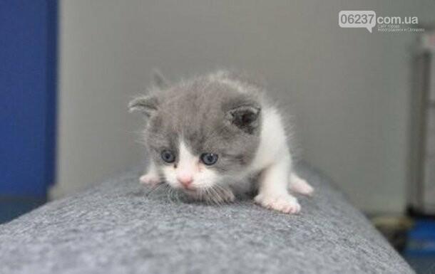 В Китае появился первый клонированный кот, фото-1