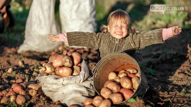 В Україні обвалилися ціни на овочі, але скоро все зміниться, фото-1