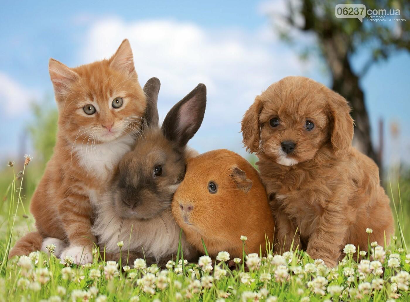 Як обрати домашню тварину для себе та дитини, фото-1