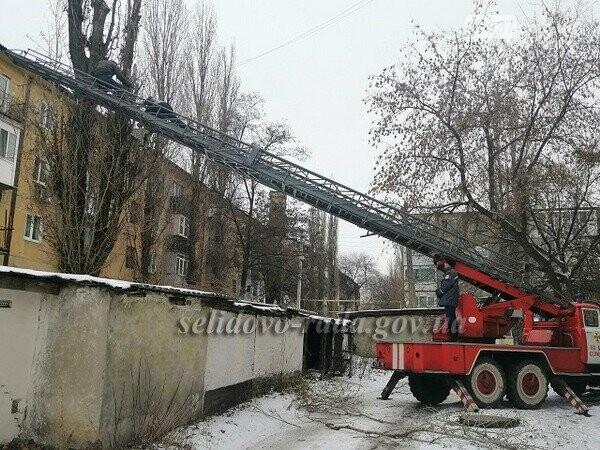 В Селидово спиливают сухие и аварийные деревья, фото-1