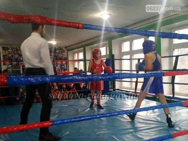 Стали известны победители Открытого первенства Селидово по боксу, фото-1