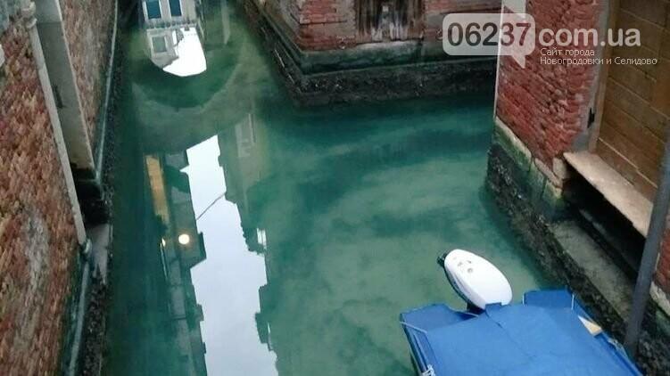 В Венецию из-за карантина впервые за 60 лет вернулись дельфины, фото-1