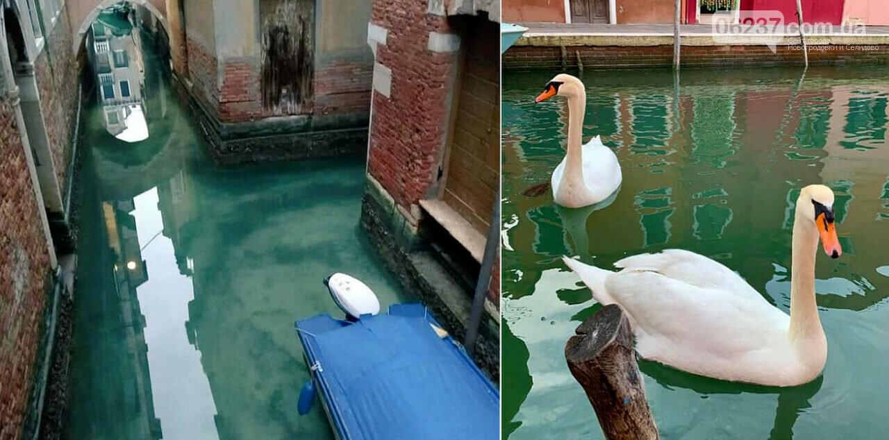 В Венецию из-за карантина впервые за 60 лет вернулись дельфины, фото-3