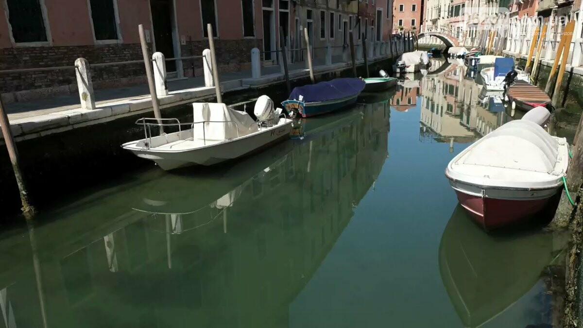 В Венецию из-за карантина впервые за 60 лет вернулись дельфины, фото-2