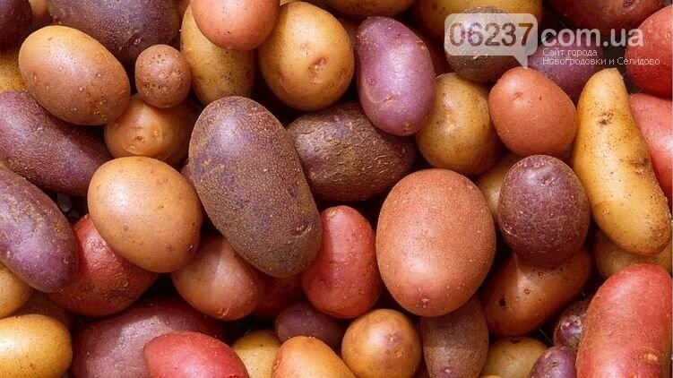 Нидерланды вместо того, чтобы утилизировать свой картофель, продали его Украине, фото-1