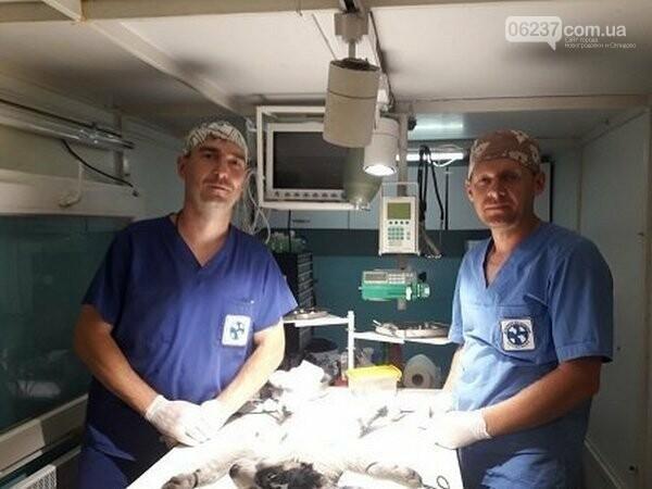 «Ветеринары без границ» проводят стерилизацию бездомных животных в Новогродовке, фото-1