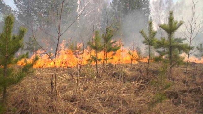 В донецкой области чрезвычайный уровень пожарной опасности, фото-1